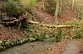 Fallen Tree - geograph.org.uk - 306298.jpg