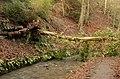 Fallen Tree - geograph.org.uk - 306298.jpg