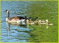 Family Swim 4-5-14f (13723561405).jpg