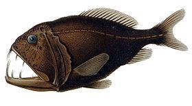 ماهی دنداننیش