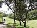 Fanling Old Course.JPG
