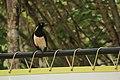 Fauna do Parque Nacional Serra da Capivara (0286).jpg