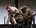 Feeding Monkey.jpg