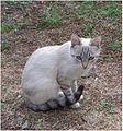 Female-cat-named-Liebe.jpg