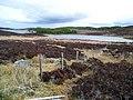 Fenceline to Loch nam Bonnach - geograph.org.uk - 777383.jpg