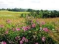 Fertile Field - panoramio.jpg