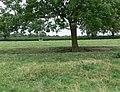 Field and tree alongside Ashby Road - geograph.org.uk - 943303.jpg