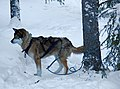 Finland 2012-01-28 (6839186590).jpg