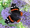 Fleurs et papillon au jardin des iris - Jardin des Plantes Paris 2.JPG