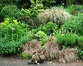 Flickr - brewbooks - Cinnamon - in Our Garden.jpg