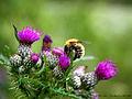 Flickr - law keven - Feeling small.....jpg