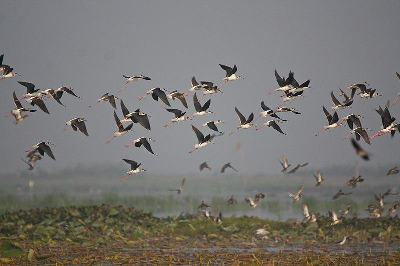 File:Flock of Birds (7175071318).jpg