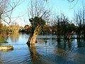 Floodwaters, near Riverside Gardens, Witney - geograph.org.uk - 308600.jpg