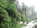 Flora and Fauna at Darjeeling 2.jpg