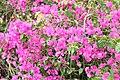 Flora of Sihanoukville.jpg