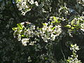 Flower up the tree2.jpg