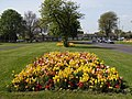 Flowerbeds in Cunningham Drive (2) - geograph.org.uk - 1271741.jpg