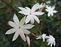 Flowers (228).jpg