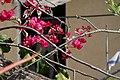 Flowers - Israel (10).jpg