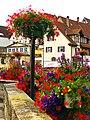 Flowers - panoramio (45).jpg