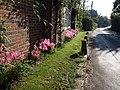 Flowers by Throop Road - geograph.org.uk - 1546567.jpg