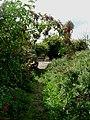 Footpath - geograph.org.uk - 37905.jpg