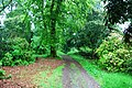 Footpath through Muncaster Castle Grounds (2) - geograph.org.uk - 1335657.jpg