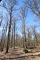 Forêt Départementale de Beauplan à Saint-Rémy-lès-Chevreuse le 14 mars 2018 - 07.jpg