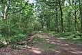 Forêt domaniale de Bois-d'Arcy 30.jpg