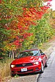 Ford Mustang in Nicely Coloured Fall Foliage in New Hampshire -exfordy.jpg