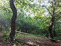 Forest in Goygol region of Azerbaijan 1.jpg