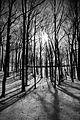 Forest on the Oak Ridges Moraine in 2009.jpg