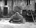 Fountain in Bevagna, Umbria, Italy.jpg