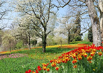 Mainau - Image: Frühlingsallee Tulpenblüte 2010 (1)