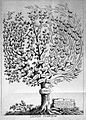 Francisco Torti, Therapeutice specialis; tree of fevers Wellcome L0022898.jpg