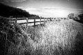 Fridays Fence IR (Olympus Trip 35) EXPLORE - Flickr - Mr B's Photography.jpg