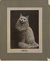 Fritz the cat (HS85-10-11178).jpg