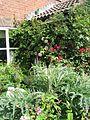 Front garden - Flickr - peganum (1).jpg