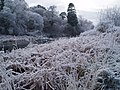 Frost on the River Don - geograph.org.uk - 643732.jpg