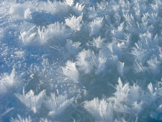 Frost flower (sea ice) - Frost flowers growing on young sea ice in the Arctic