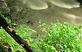 Fungus, Crawfordsburn Glen (11) - geograph.org.uk - 913085.jpg