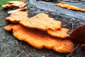 Fungus on log.jpg