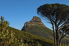 Fynbos, Lion's Head und Bäume vom Tafelbergweg.jpg