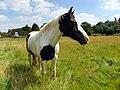 GOC Ickleford 034 Horse (7831304696).jpg
