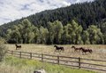 Galloping horses along the road from Colorado's Crystal River Valley up to Crested Butte in Gunnison County LCCN2015633785.tif