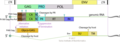 Gammaretrovirus genome.png