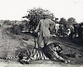 Ganga Singh with tiger, 1910.jpg