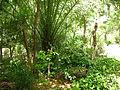 Garden foliage 2015 (498327787).jpg