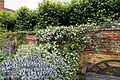 Garden wall and shrubs Hatfield House Hertfordshire England.jpg