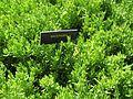 Gardenology.org-IMG 0518 hunt07mar.jpg